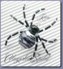 Spinnen handgefertigt